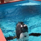 My peguin friend. He splashed me on purpose - stinker!